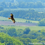 bird watching a red kite, birders, birding