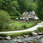 Watersmeet Tearoom Garden for birdwatching, birdwatchers, birding, birders