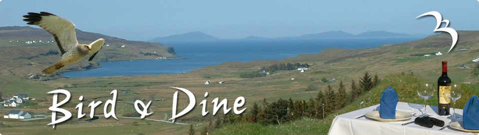 Birding and Dining at the same time at bird and dine