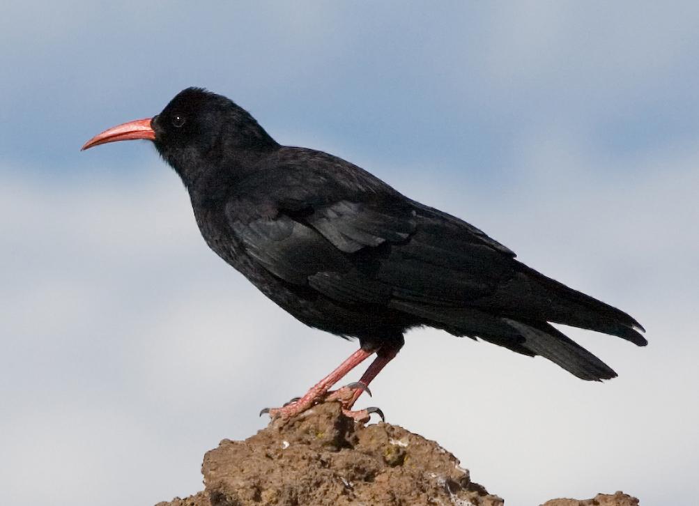 Inis Me 225 In Restaurant Aran Islands Birding And Dining