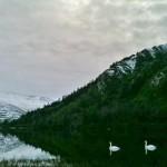 eerie bird watching swans, birders, birding