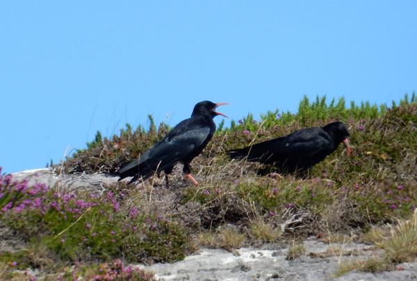 Three Castle Head Cafe Dunlough Cork Birding And