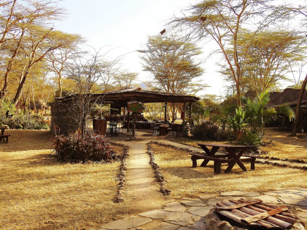 Africa Birding And Dining At The Same Time At Bird And Dine