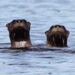 109-otters-hotelkenney-elgin-canada
