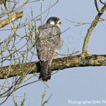George III Penmaenpool ideal for bird watching Peregrines, birders, birding