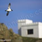 coming into land for birdwatching, birdwatchers, birding, birders